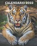 Calendario 2022: Libro calendario mensile 2022 con immagini di bellissimi animali selvatici