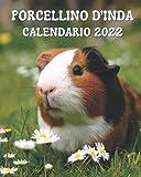 Calendario Porcellino d'India 2022: Libro calendario mensile 2022 con immagini di bellissimi porcellini d'India